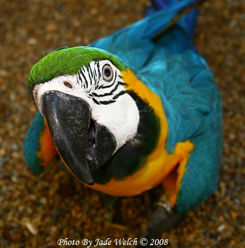 macawwhat.jpg